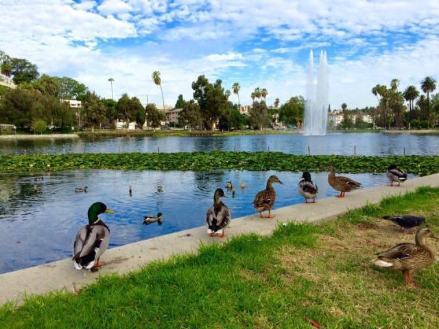 Echo Park Lake 3